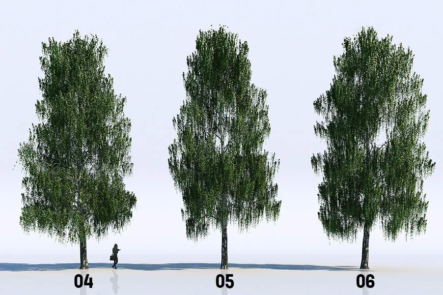 18 Birch Trees free Vizpeople
